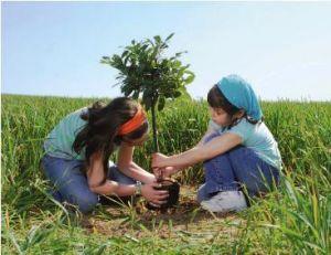20130222_cultura_nasce_un_bimbo_pianta_un_albero